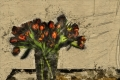 tulipani_def copia