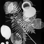 OZ_Meris Angioletti, D-76, Fossil, 2017-2018, gelatin silver photograms transferred on photo paper, 45X60 cm Courtesy Otto Zoo_07a