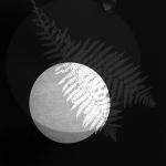 OZ_Meris Angioletti, D-76, Lunaria#2, 2017-2018, gelatin silver photograms transferred on photo paper, 45X60 cm Courtesy Otto Zoo_02