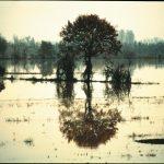 della Luce e dei Riflessi/of Light and of Reflections
