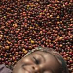 Changing world: the women of coffee. Portraits from Masaka