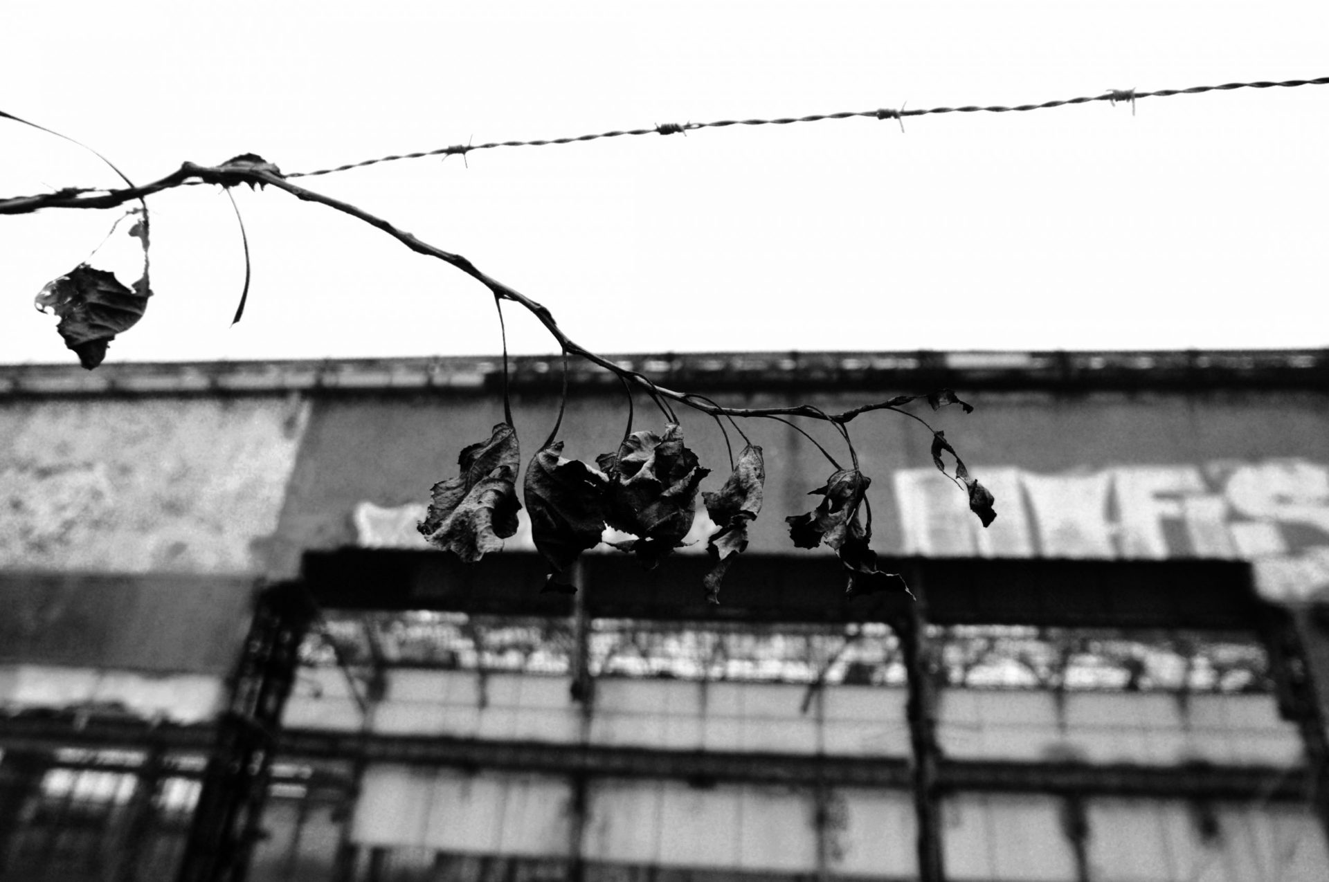 ILA BNW 6718 scaled - Milano Photofestival