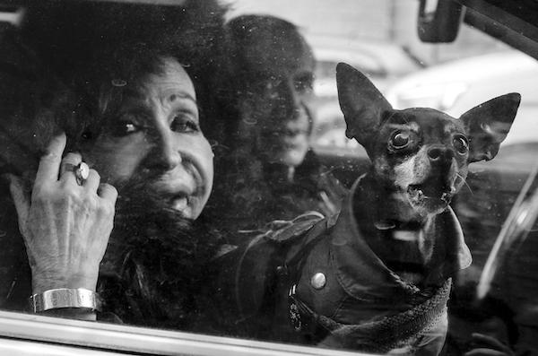 La cittÖ dei cani 1 copia 600 - Milano Photofestival