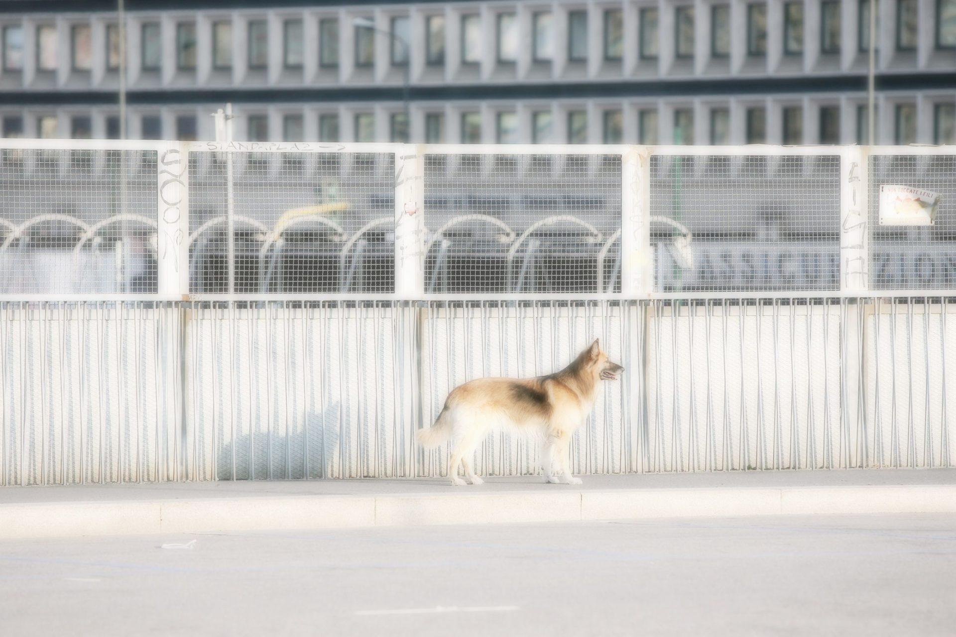 MAX 0466 scaled - Milano Photofestival