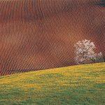 Il paesaggio che vive/The landscape that lives – Luciano Marchi