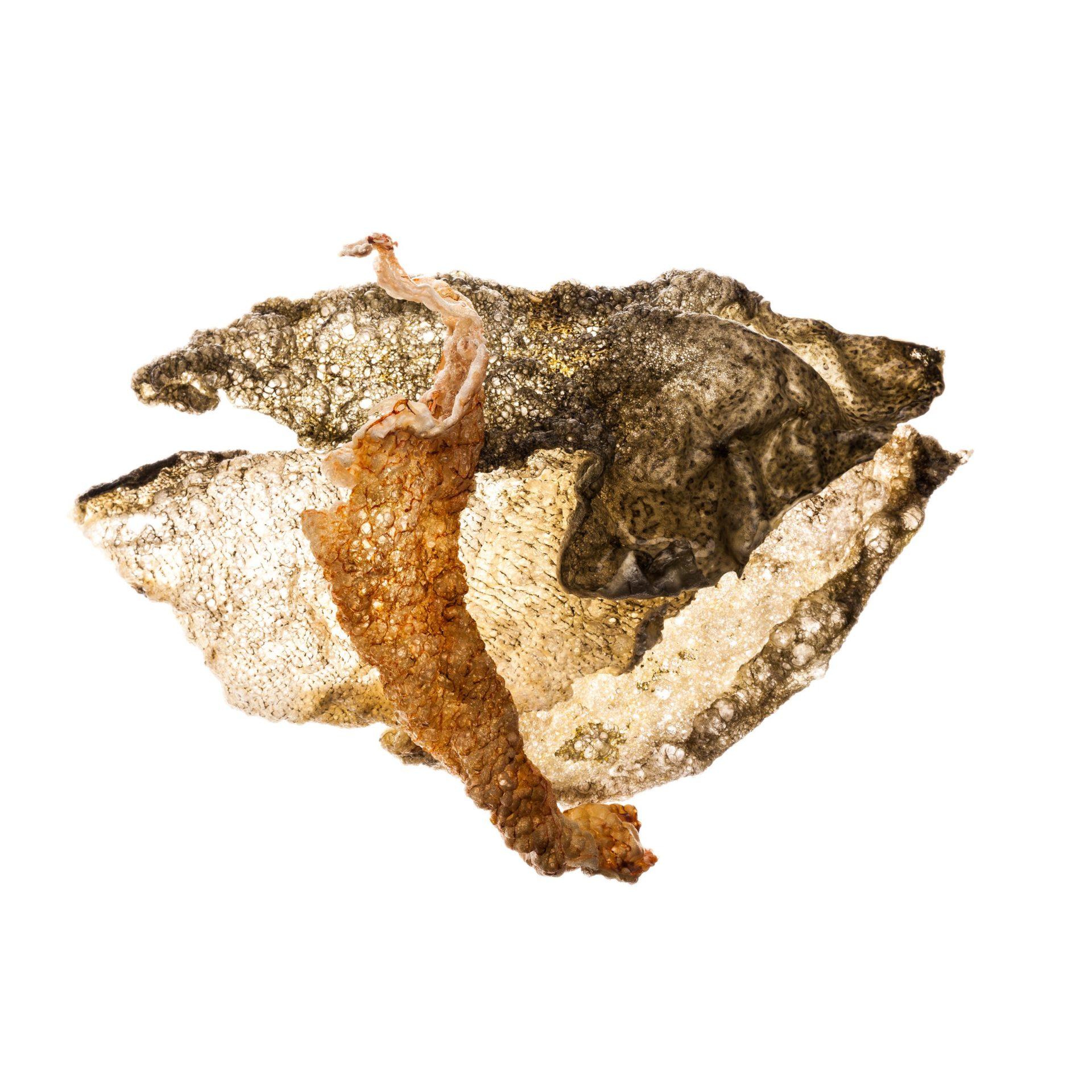 Paolo Della Corte Fish Skins copia scaled - Milano Photofestival