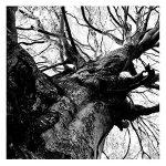 Arborgrammaticus – Tre percorsi/Three pathways – Tiziano Fratus