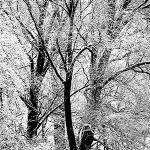 Come neve/Like snow – Guido Bartoli