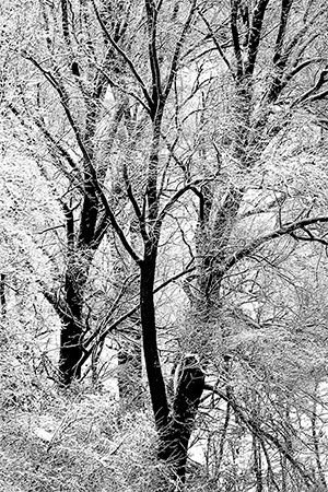 comeneve MG 0542 - Milano Photofestival