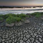 Wetlands: the lands of water