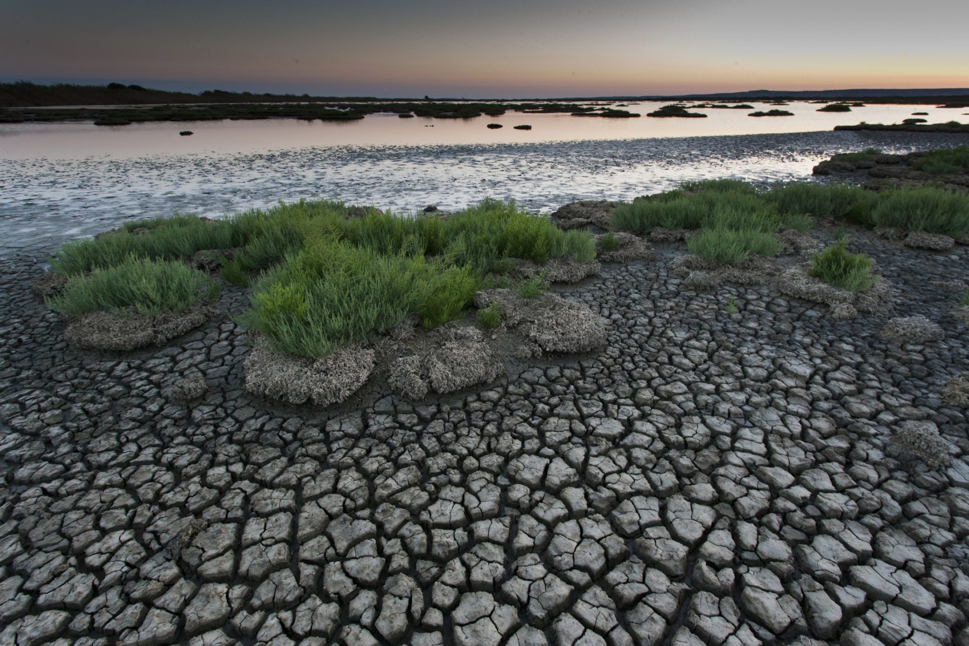 Wetlands: le terre d'acqua