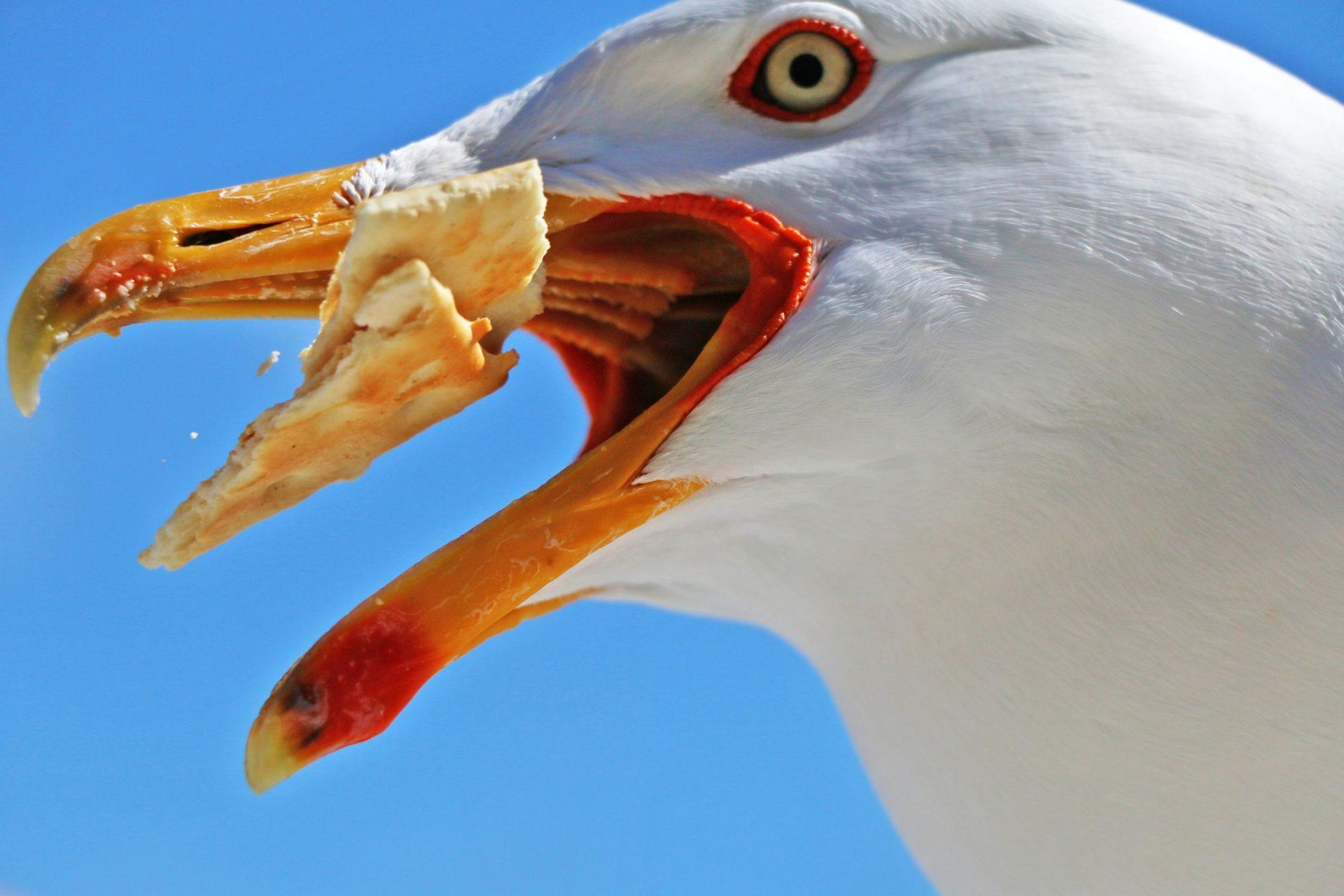 Seagull friendly